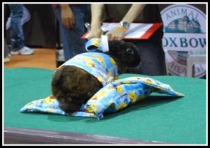 Lola the slumber bunny : Is it bedtime yet? No photo, please.. Read me bedtime stories now!