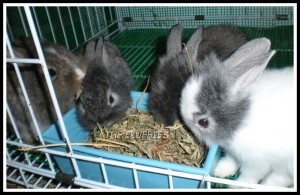 Taken on 24 June 2009. The white one Odylle died 2 days after this photo was taken..