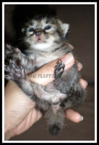 Isn't he cute???