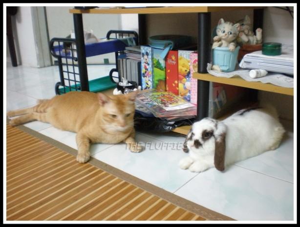 Jebat & Shiro-bunn