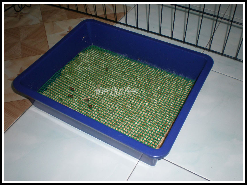 diy rabbit litter box 3